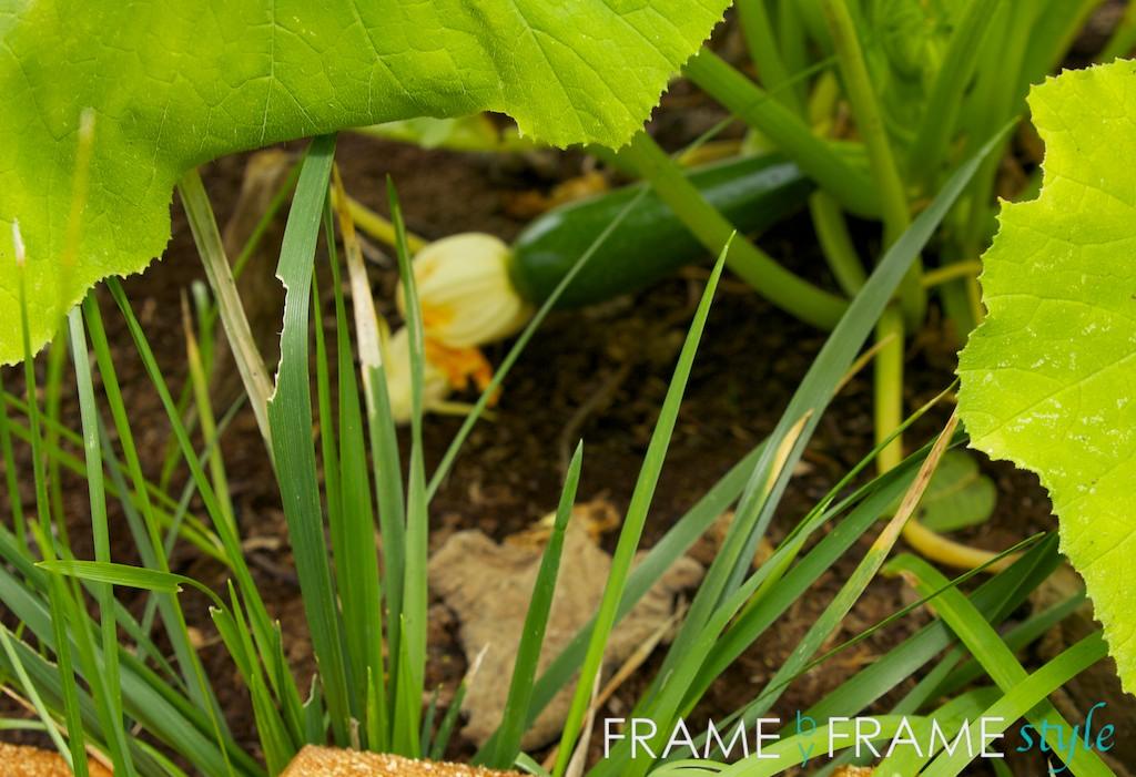 Vegetable garden for Stylish vegetable garden