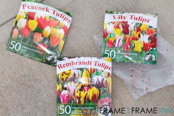fbfs_tulipsbulbs