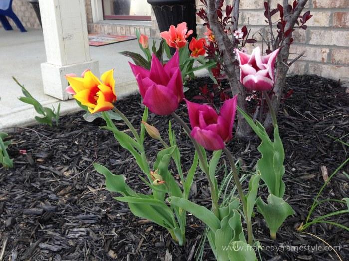 FBFS_Tulips-6